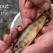 Brook Trout: Gems of the Piedmont Webinar + Resources