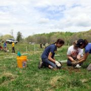 Headwater tree planting