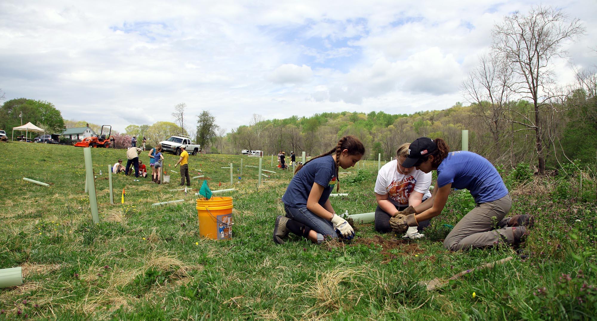Headwater tree planting