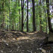 Heyward Community Forest trails