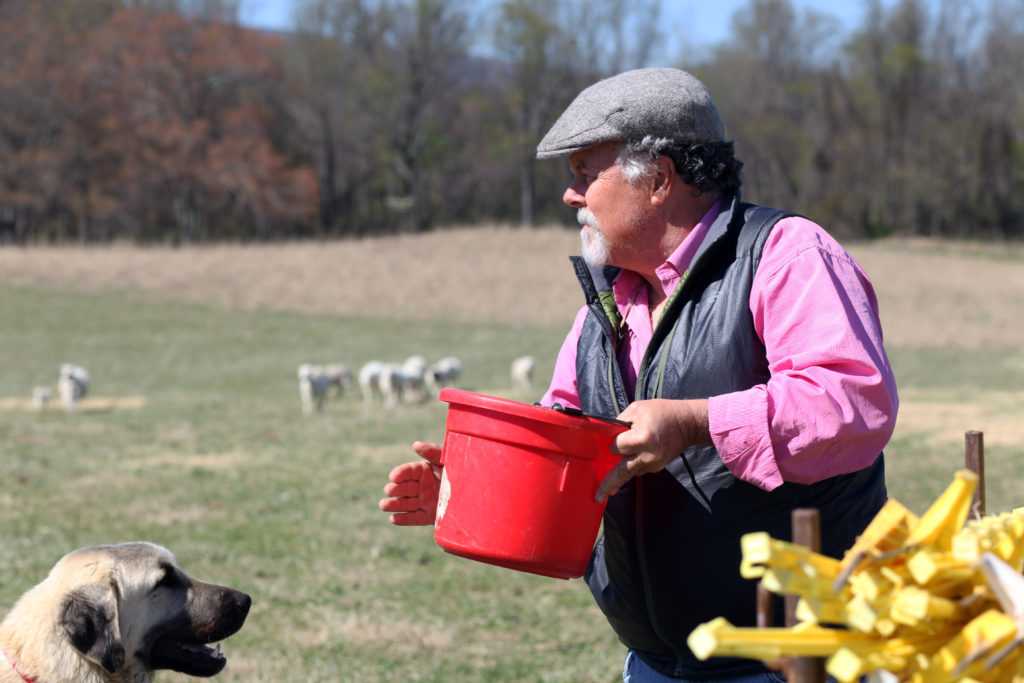 Mike Sands and his dog at a pasture filled with sheep.