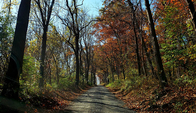 Loudoun rural road