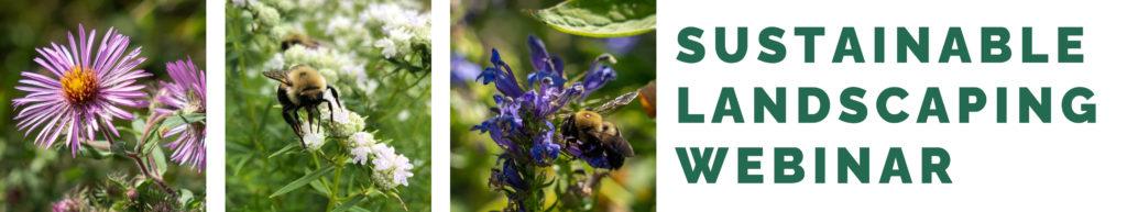 Webinar: Sustainable Landscaping Workshop