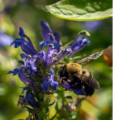 """graphic with native flowers and bees with text that says """"sustainable landscaping webinar"""""""
