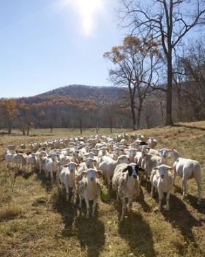 Renovating Worn-Out Pastures