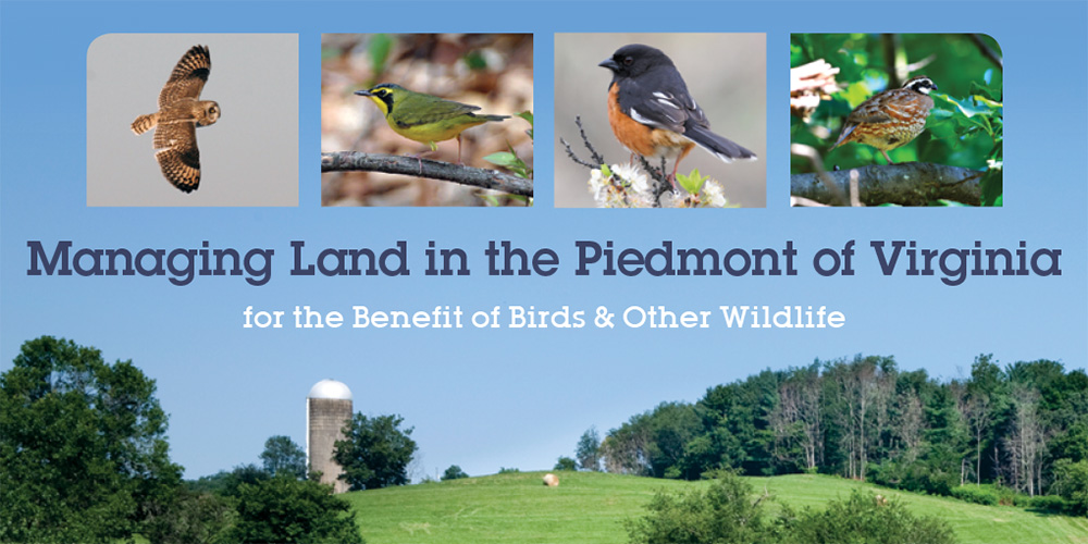 Managing Land in the Piedmont for the Benefit of Birds & Other Wildlife