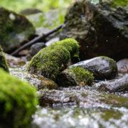 Bolton Branch trout stream