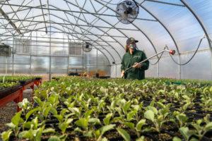 farmer Dana waters seedlings