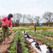 Webinar: Strengthening the Local Food System