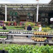 people shopping at a garden center