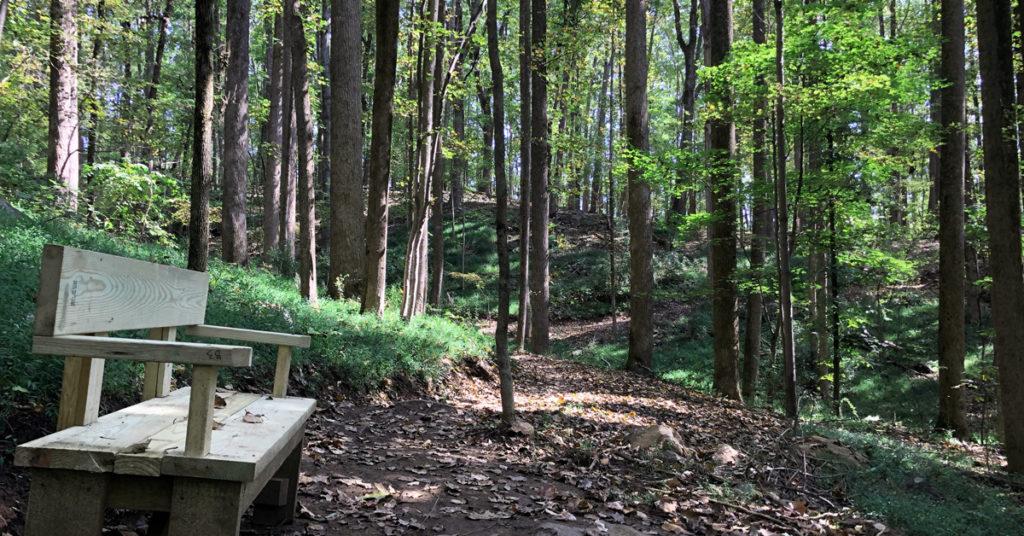 trail in heyward community forest
