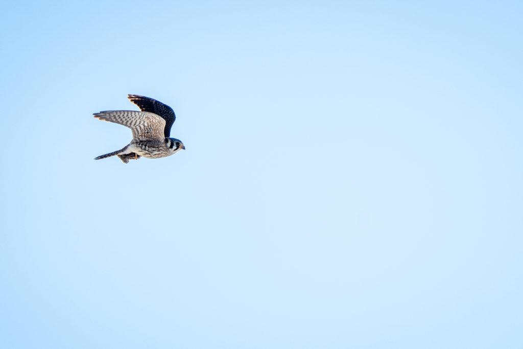 What is the Piedmont Grassland Bird Initiative?