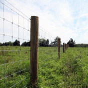 Fenced in at Roundabout Meadows