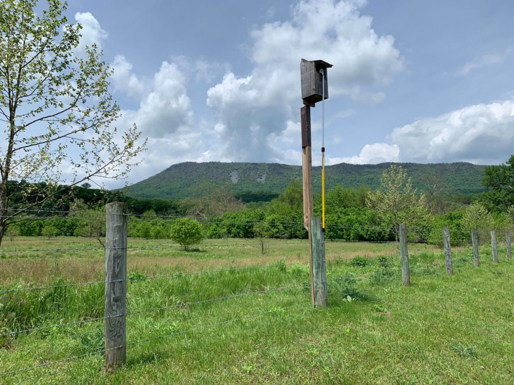 a nest box in a field with mountains in the background