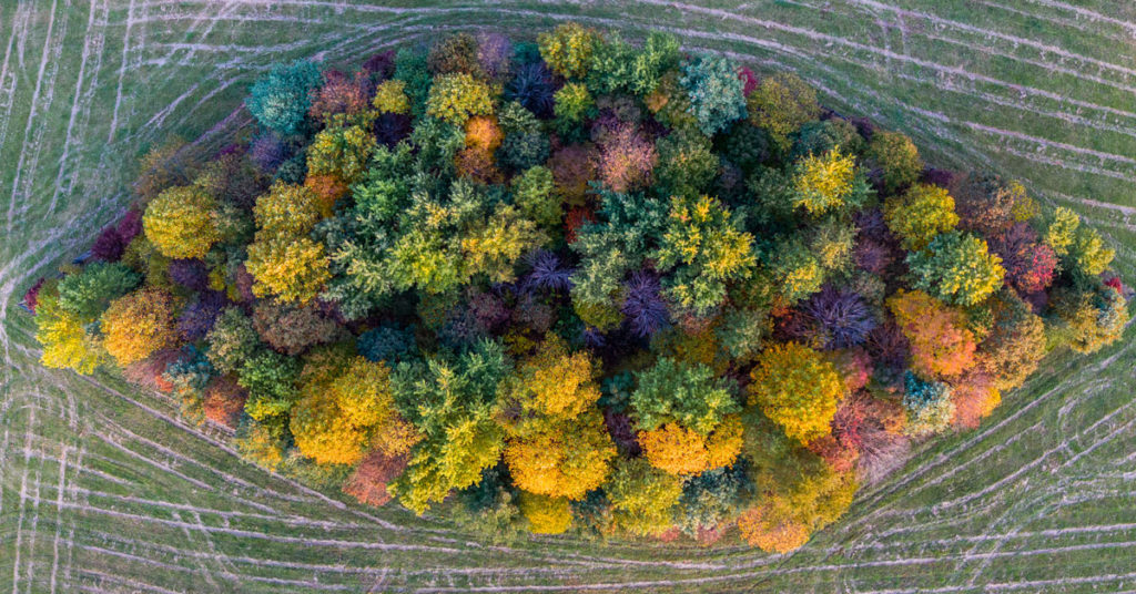 overhead photo of stand of trees in fall foliage