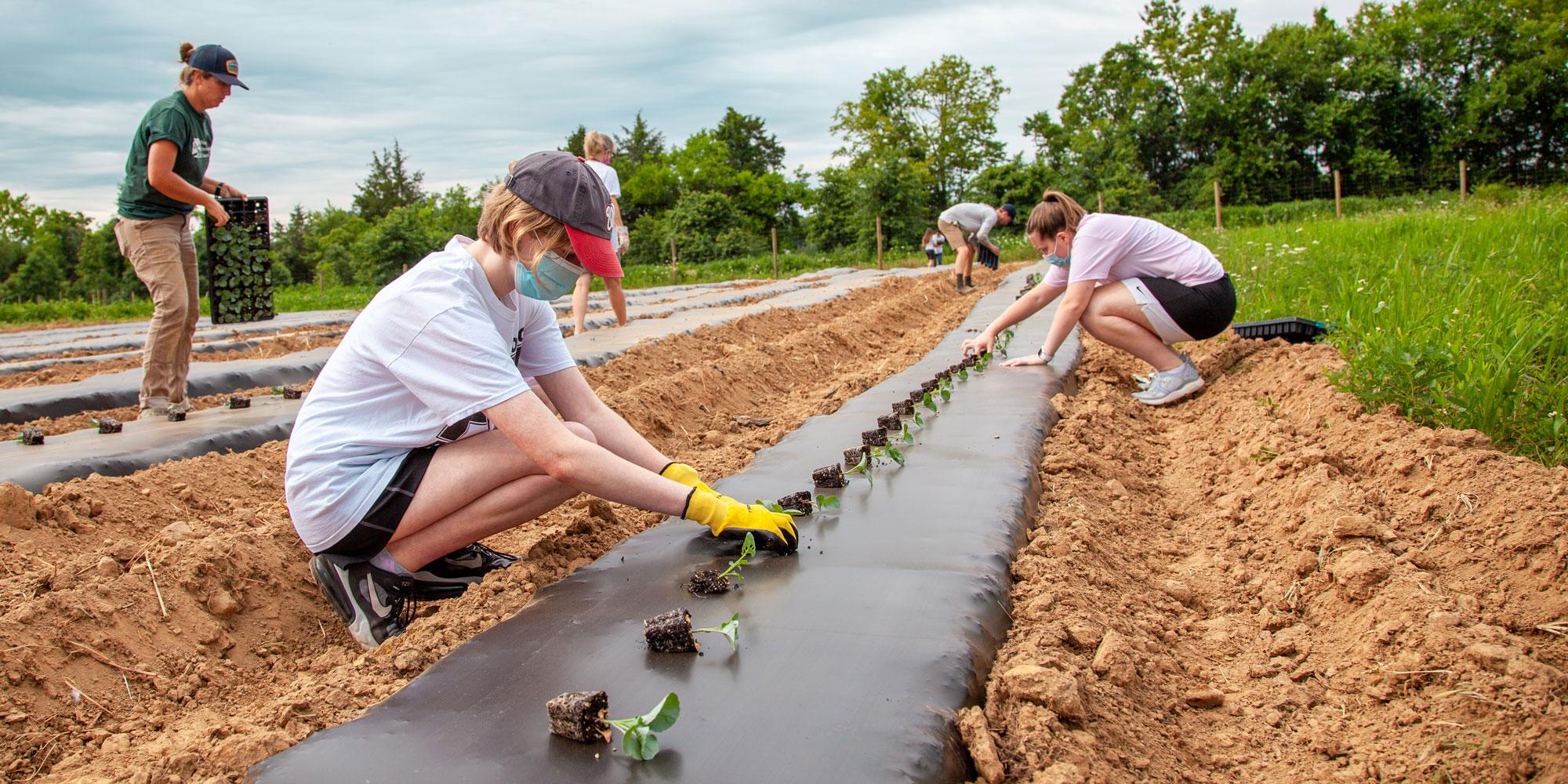 volunteers planting at pec's community farm