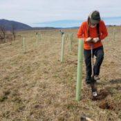 tree planting photo