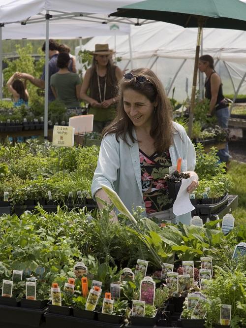 Spring Native Plant Sales