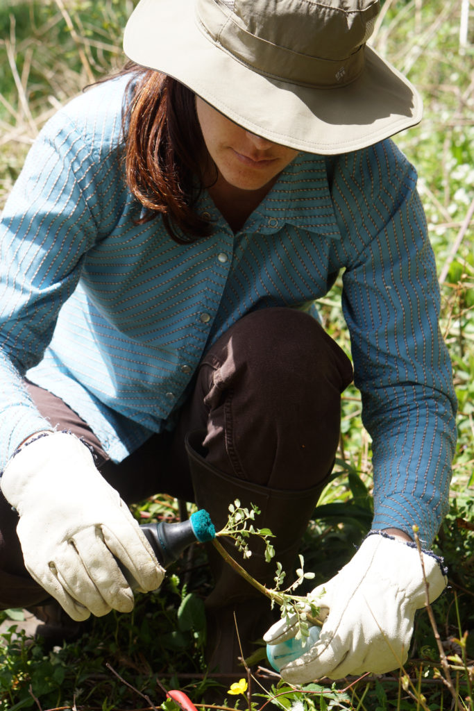 How You Can Get Rid Of Invasive Species On Your Property