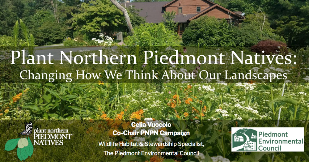 Online Event: Plant Northern Piedmont Natives – Changing How We Think About Our Landscapes