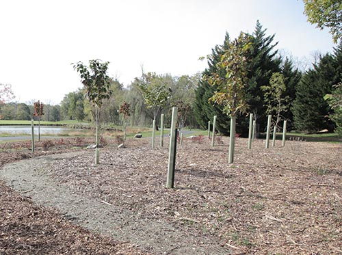 Recently planted tree saplings in tubes.