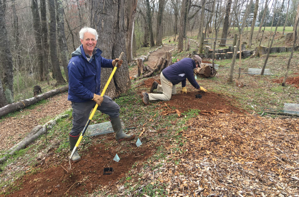 planting seedlings at rappahannock county park