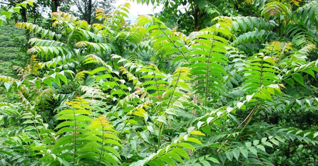 Invasive Species in Your Own Backyard